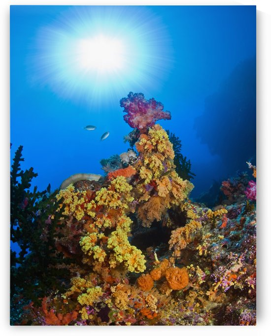 Underwater Starburst Streaming Down On Soft Corals, Fiji by PacificStock