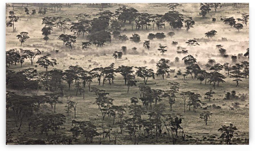 Ngorongoro Crater, Tanzania, Africa by PacificStock