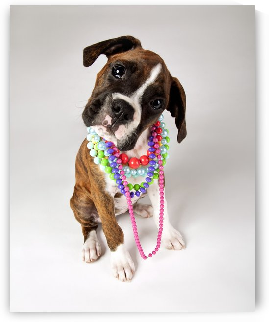 Dog With Necklaces by PacificStock
