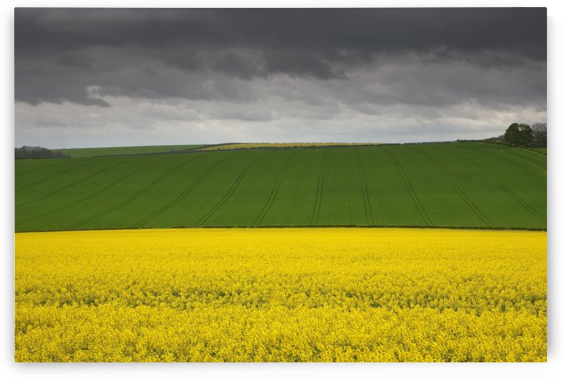 Fields; North Yorkshire, England by PacificStock