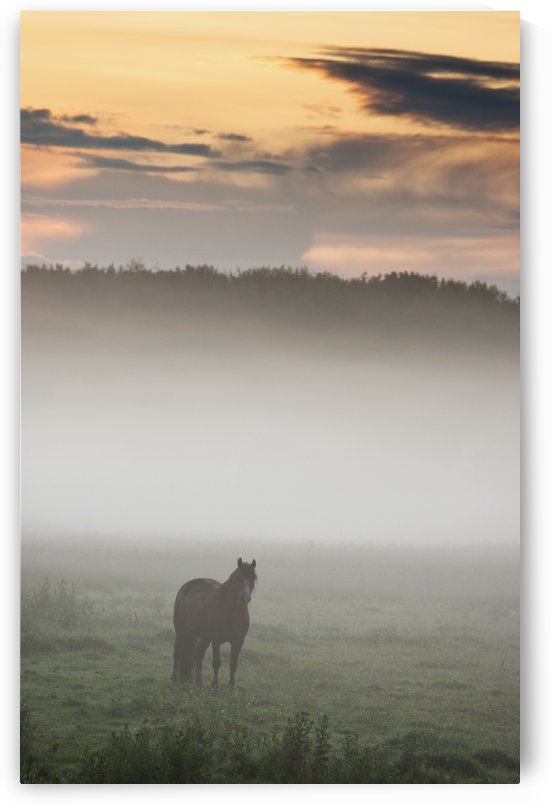 Horse Standing In The Mist, Northumberland, England by PacificStock