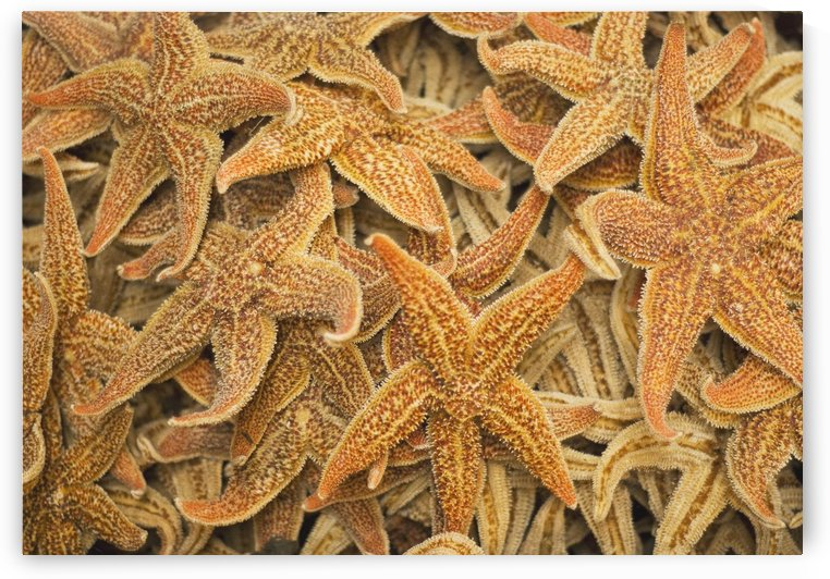 Dried Starfish On A Street Market In Hong Kong, China by PacificStock