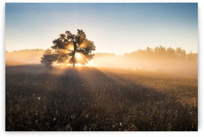 Tree in Beautiful Morning Light by Andreas Wonisch