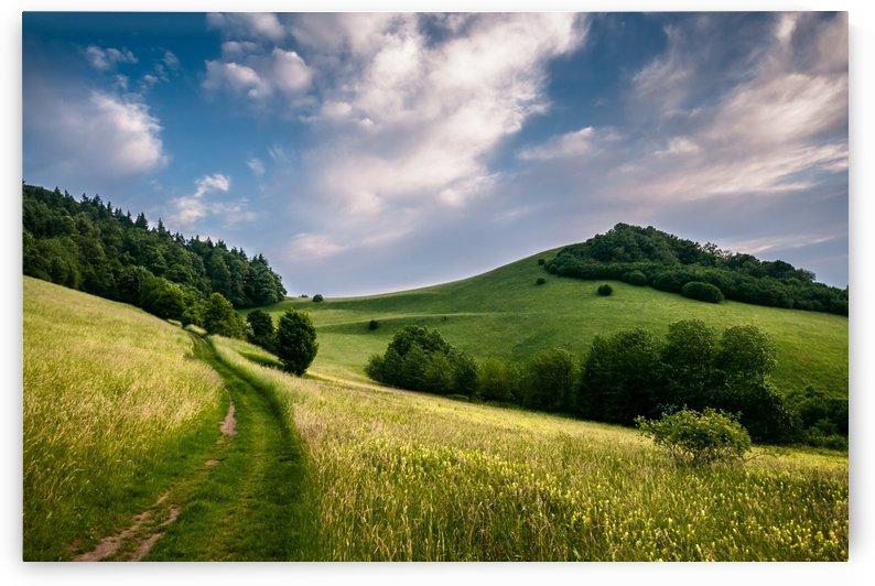 Summer Hills by Andreas Wonisch