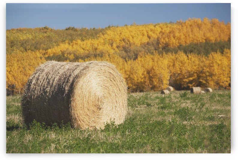 Hay Bale With Autumn Colors, Alberta, Canada by PacificStock