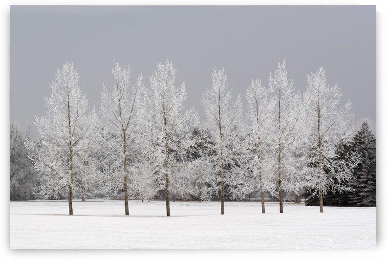 Winter, Calgary, Alberta, Canada by PacificStock