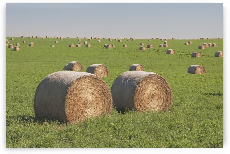 Hay Bales In A Green Alfalfa Field by PacificStock