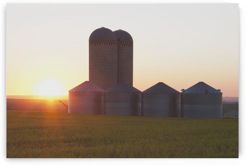 Alberta, Canada; Grain Bins At Sunrise by PacificStock