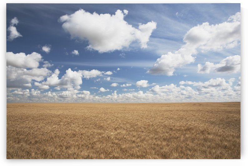 Wheat Field And Clouds In The Sky by PacificStock