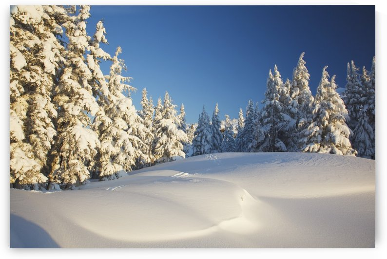 Winter Scene, Mount Hood, Oregon Cascades, Oregon, Usa by PacificStock
