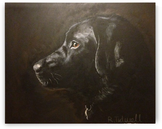 Black Labrador by Tidwell