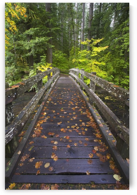 Bridge In A Park by PacificStock