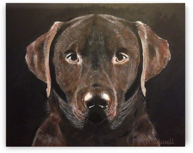 Chocolate Labrador by Tidwell