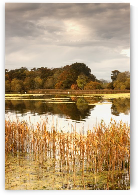 Northumberland, England; Water And The Shoreline In Autumn by PacificStock
