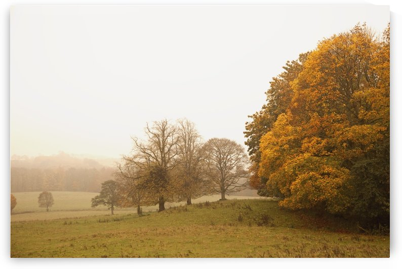 Northumberland, England; A Landscape In Autumn With Fog by PacificStock
