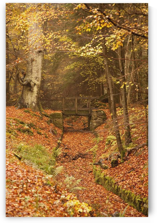 Northumberland, England; A Creek Through The Forest In Autumn With A Bridge Crossing Over It by PacificStock