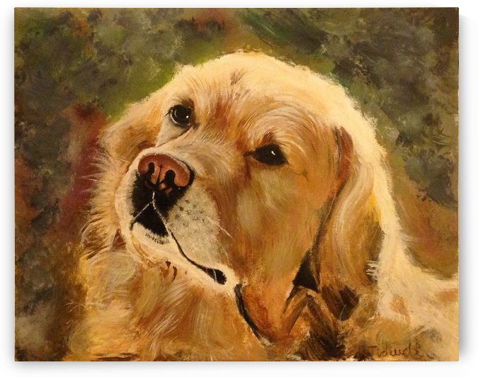 Golden Retriever by Tidwell