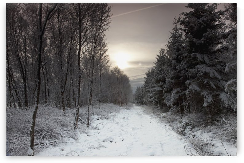 Northumberland, England; A Trail Leading Through The Woods In The Winter by PacificStock