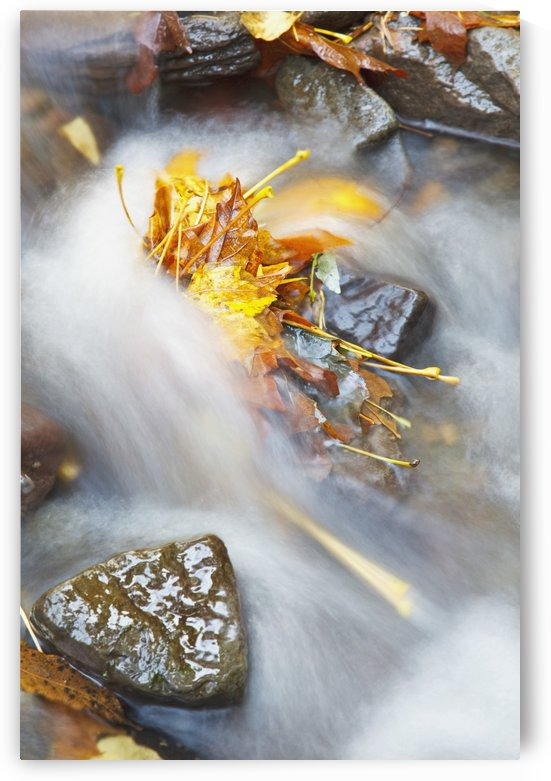 Oregon, United States Of America; Flowing Water In A Creek In Autumn In Columbia River Gorge National Scenic Area by PacificStock