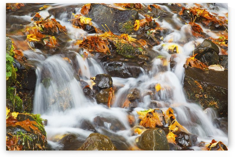 Water Cascading Over Rocks Covered In Leaves In Autumn by PacificStock