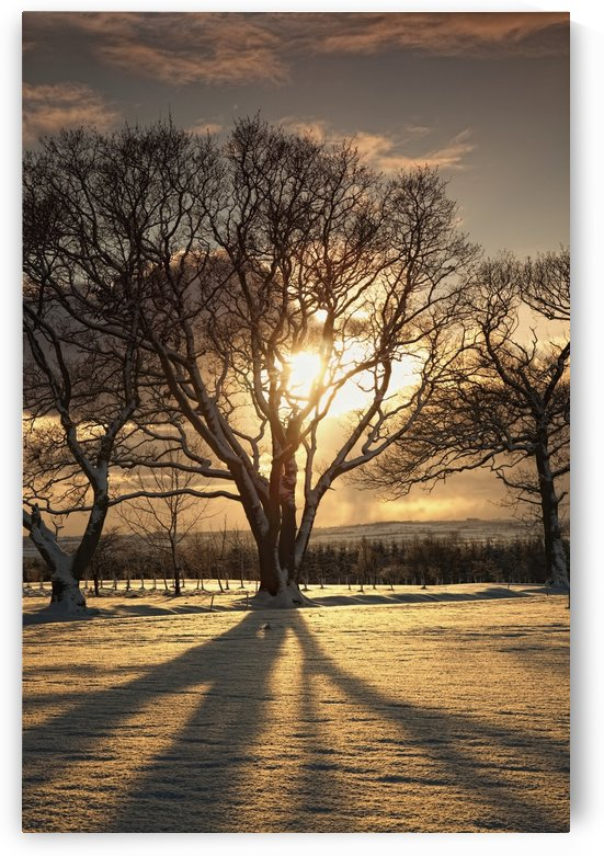 Northumberland, England; The Sun Setting Through The Trees by PacificStock