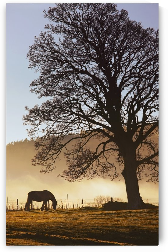 Northumberland, England; A Horse Grazing In A Field by PacificStock