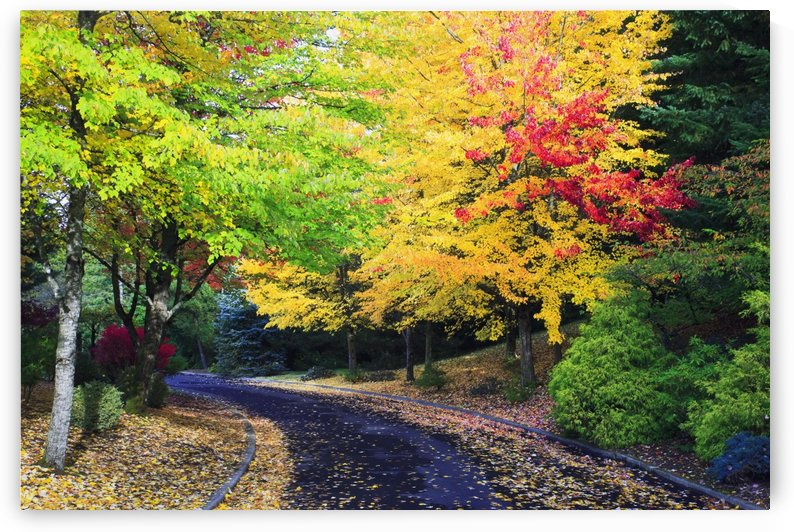 Oregon, United States Of America; Trees Lining The Road In Autumn Colors by PacificStock
