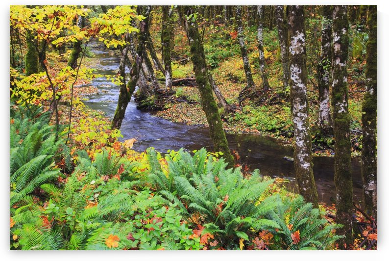 Oregon Coast Range, Oregon, United States Of America; Autumn Colors Along Wolf Creek by PacificStock