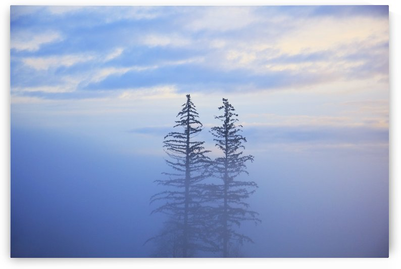 Oregon Cascades, Oregon, United States Of America; Trees In The Fog by PacificStock