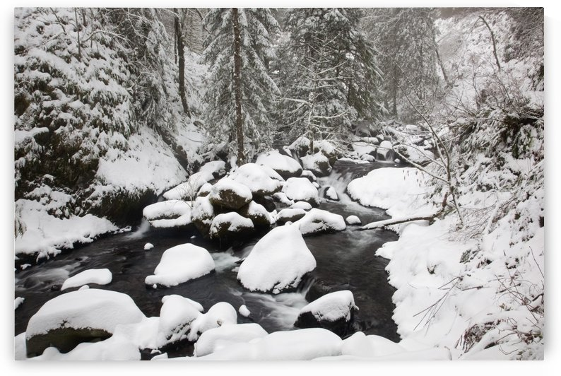 Columbia River Gorge National Scenic Area, Oregon, United States Of America; Snow Covering The Ground And Rocks In A Creek by PacificStock