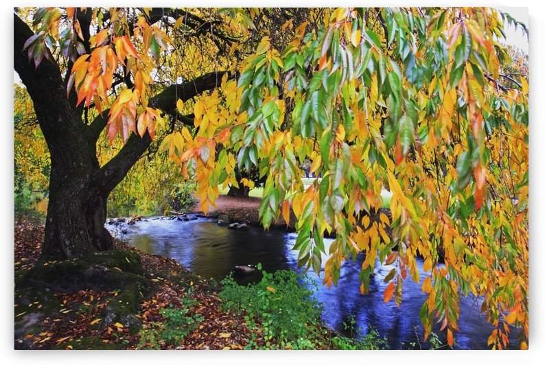 Portland, Oregon, United States Of America; Autumn Colors Along Johnson Creek At Westmorland Park by PacificStock
