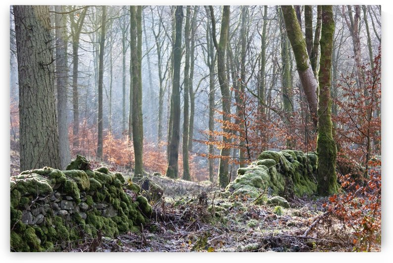 Dumfries, Scotland; A Forest With Frost On The Ground by PacificStock