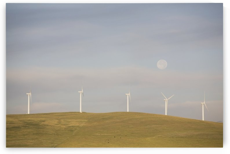 Pincher Creek, Alberta, Canada; Wind Turbines On A Hillside With The Moon In The Sky by PacificStock