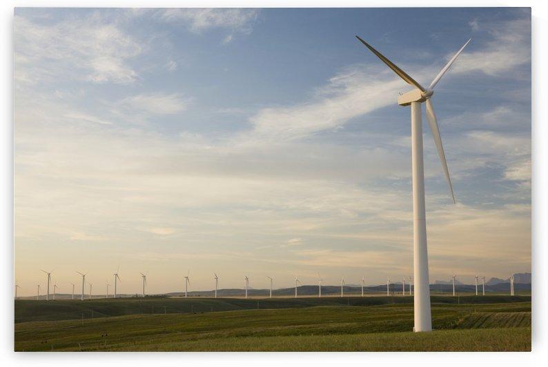 Pincher Creek, Alberta, Canada; Wind Mill Farm by PacificStock