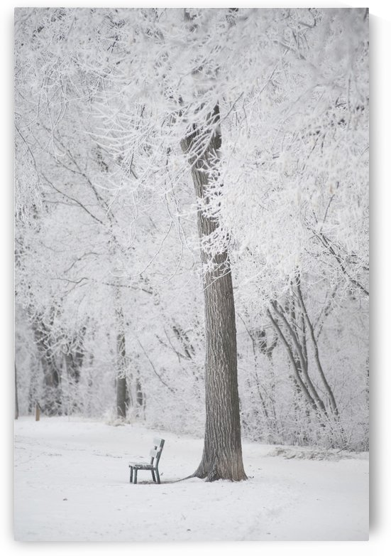 Winnipeg, Manitoba, Canada; Trees And A Park Bench Covered In Snow by PacificStock