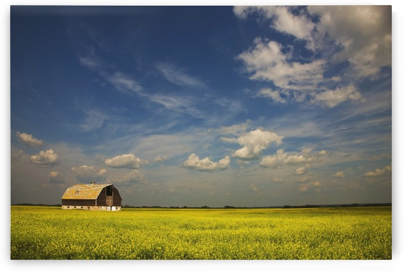 Alberta, Canada; An Old Barn In A Field by PacificStock