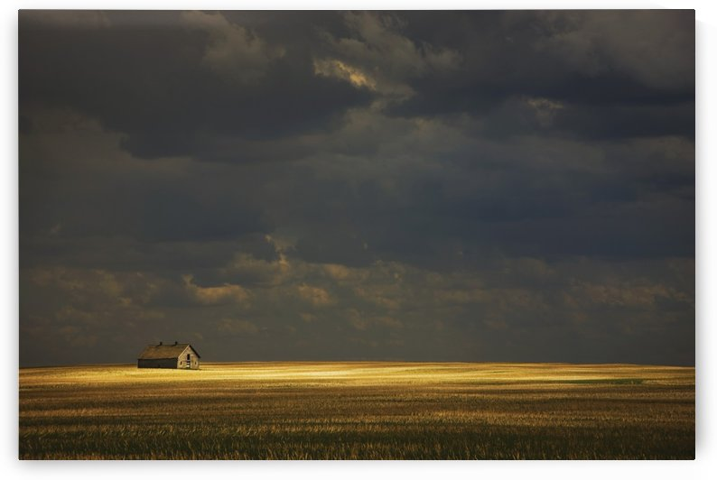 Tofield, Alberta, Canada; An Old Barn In A Field by PacificStock
