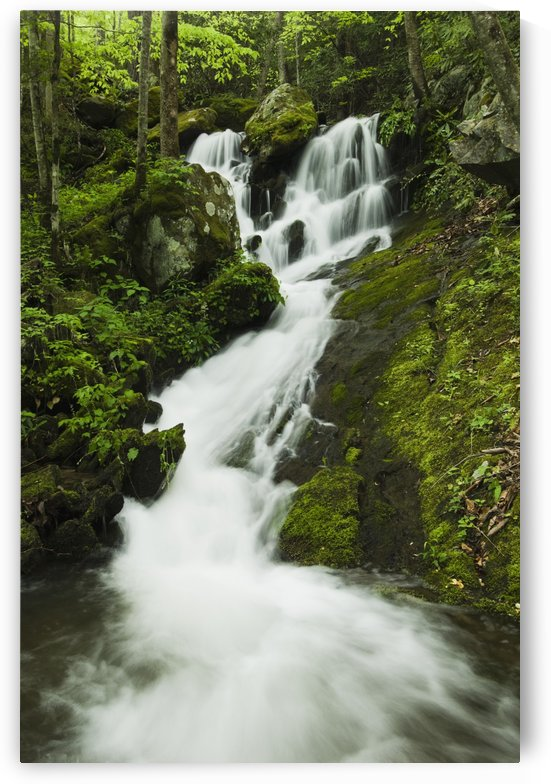 Tennessee, United States Of America; Spring Foliage And A Seasonal Waterfall In The Great Smoky Mountains National Park by PacificStock