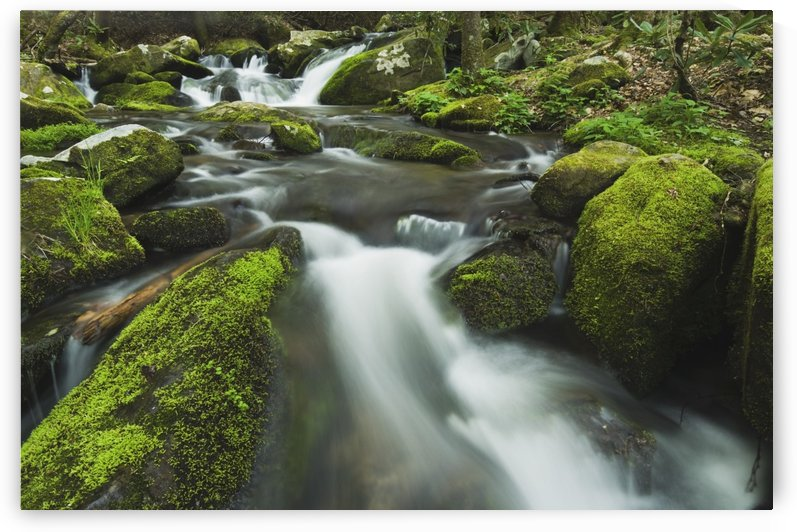 Tennessee, United States Of America; Moss Covered Rocks And Boulders In The Roaring Fork Of The Great Smoky Mountains National Park by PacificStock