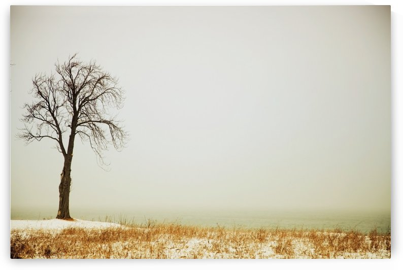 Jordan, Ontario, Canada; A Tree Along The Shore Of Lake Ontario With Some Snow by PacificStock