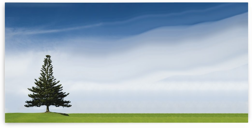 A Coniferous Tree Standing Alone In A Field by PacificStock