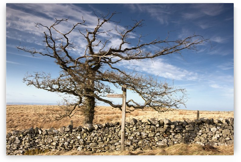 Northumberland, England; A Leafless Tree By A Stone Wall In A Field by PacificStock