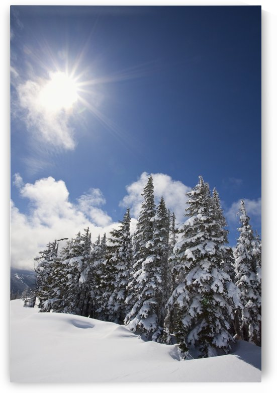 Timberline, Oregon Cascades, United States Of America; Snow On The Trees And The Sunlight On Mount Hood by PacificStock