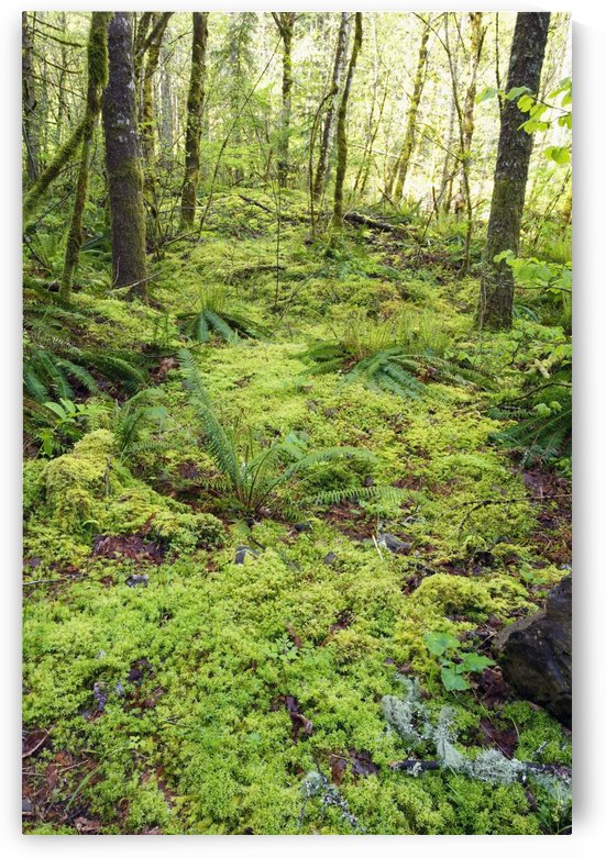 Green Foliage On The Forest Floor by PacificStock