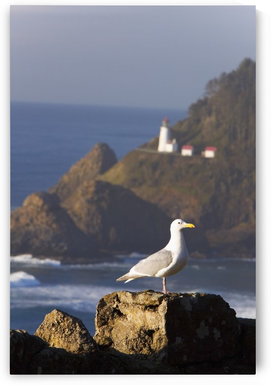 Oregon, United States Of America; A Bird Sitting On A Rock With Heceta Head Lighthouse In The Background Along The Coast Of The Pacific Ocean by PacificStock