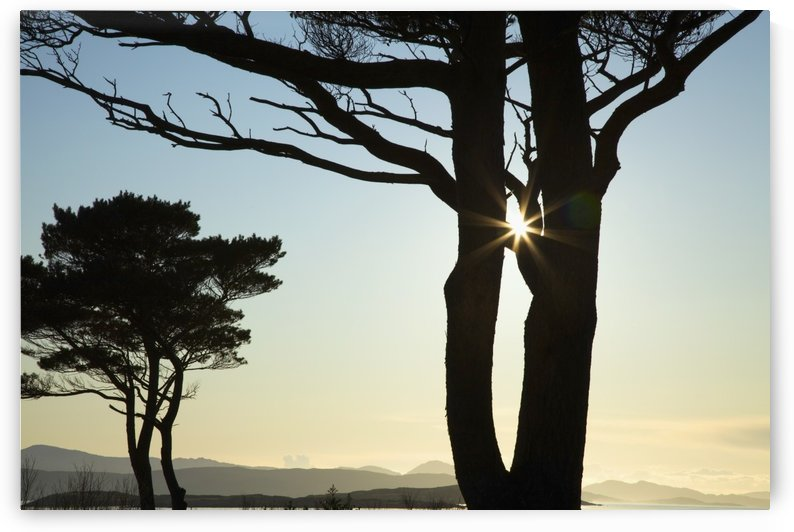 Parknasilla, County Kerry, Ireland; Silhouette Of Trees With The Sunlight Beaming Through The Branches by PacificStock
