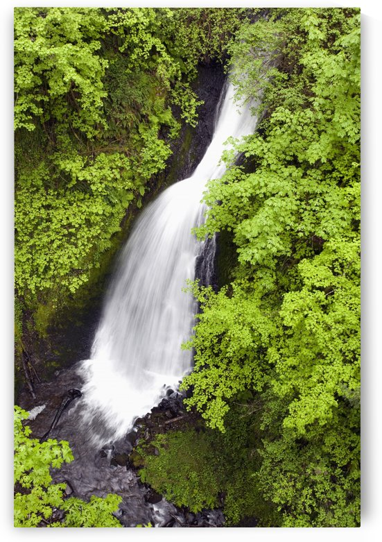 Oregon, United States Of America; Lush Green Foliage Along Shepperd's Dell Falls In Columbia River Gorge National Scenic Area by PacificStock
