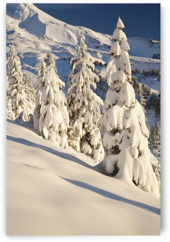 Oregon, United States Of America; Snow Covering A Mountain And Trees In Winter On Mount Hood In The Oregon Cascades by PacificStock