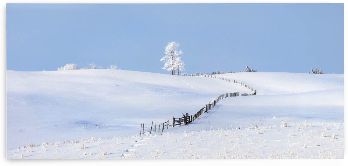 Parkland County, Alberta, Canada; A Tree And Fence In A Snow Covered Field In Winter by PacificStock