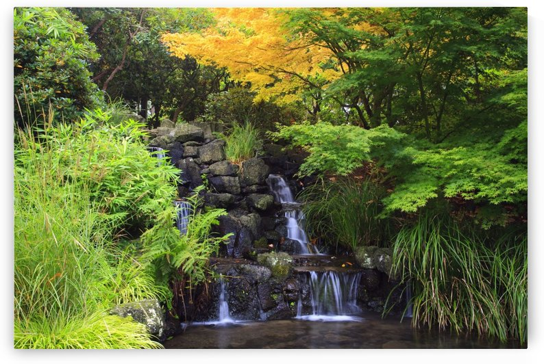 Portland, Oregon, United States Of America; Waterfalls In Crystal Springs Rhododendron Garden by PacificStock